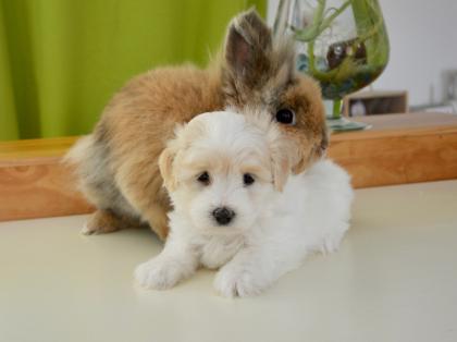 chien et lapin se faisant un câlin
