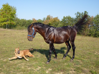 Chien et cheval en train de jouer