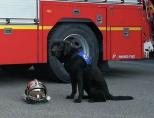 Lol, le 1er chien d'assistance judiciaire en France