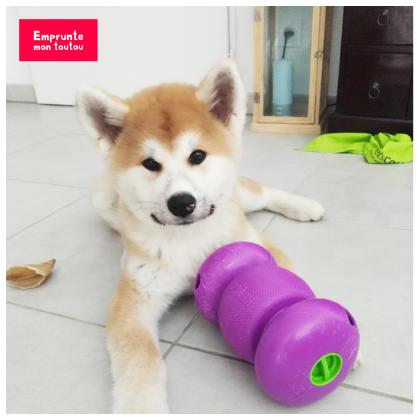 photo de chien avec son jouet