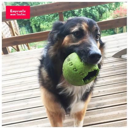 photo de chien avec une balle dans la gueule