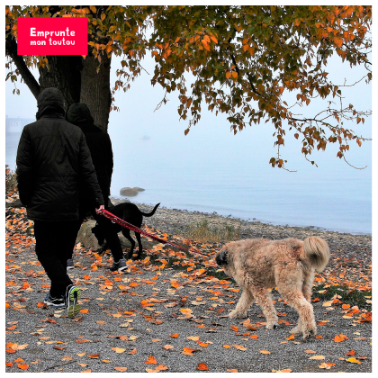 Homme promenant 2 chiens