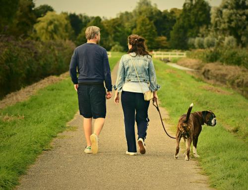 Le guide pratique de l'Emprunteur: comment bien promener un chien?