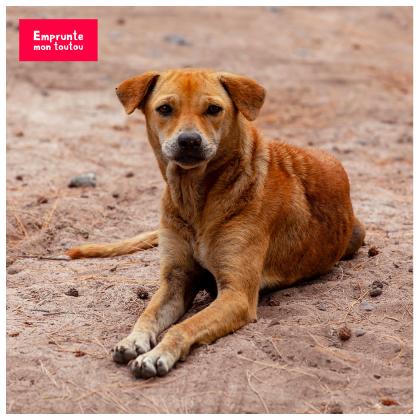 photo de chien errant couché sur le sable