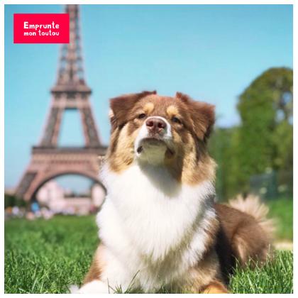 berger australien devant la Tour Eiffel