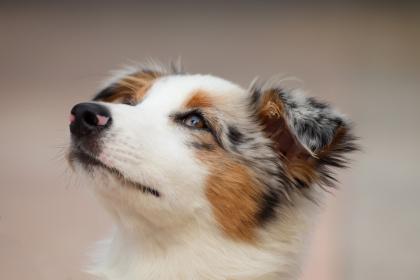 choisir le nom de votre chien