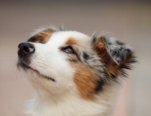 Guide du Maître: 5 conseils pour bien choisir le nom de votre chien