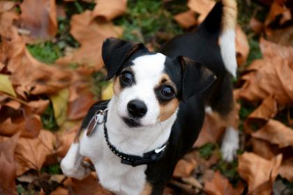 chien en automne