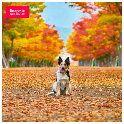 chien en forêt en automne