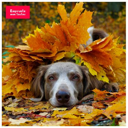 chien dans les feuilles mortes