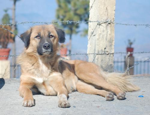 Que deviennent les chiens de Tchernobyl?