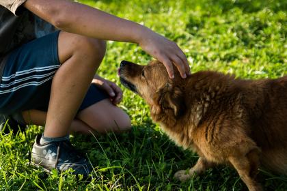 homme caressant un chien