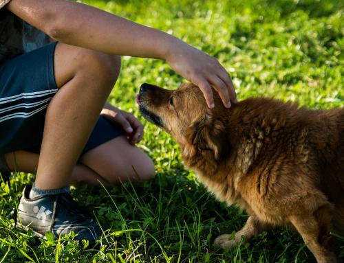 Le Conseil du Lundi #41: Garder un chien sans expérience