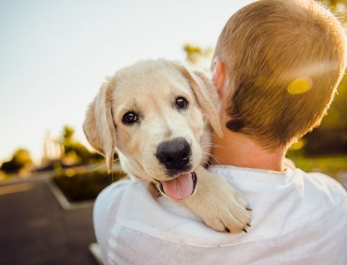 Comment savoir si votre chien est heureux?