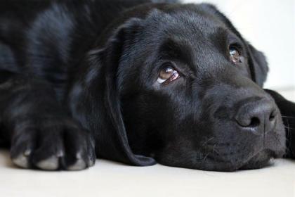 l'éducation positive pour chien