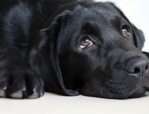 L'éducation positive pour chien : tout savoir