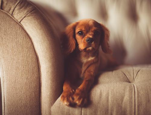 Comment garder une maison propre avec un chien