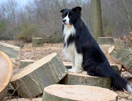 Guide du Maître : Comment faire pour que votre chien ait un joli poil