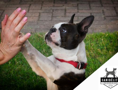 Éduquer le maître et non le chien : 10 conseils pour une éducation réussie !