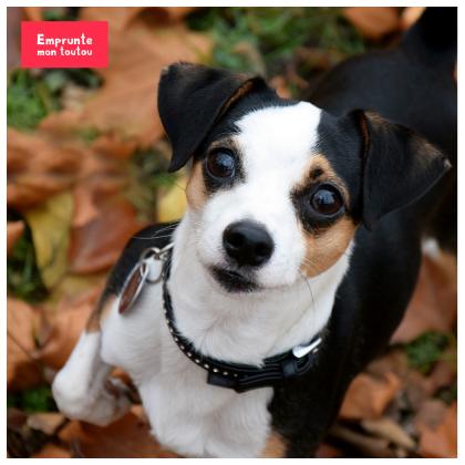 dangers de l'automne pour les chiens