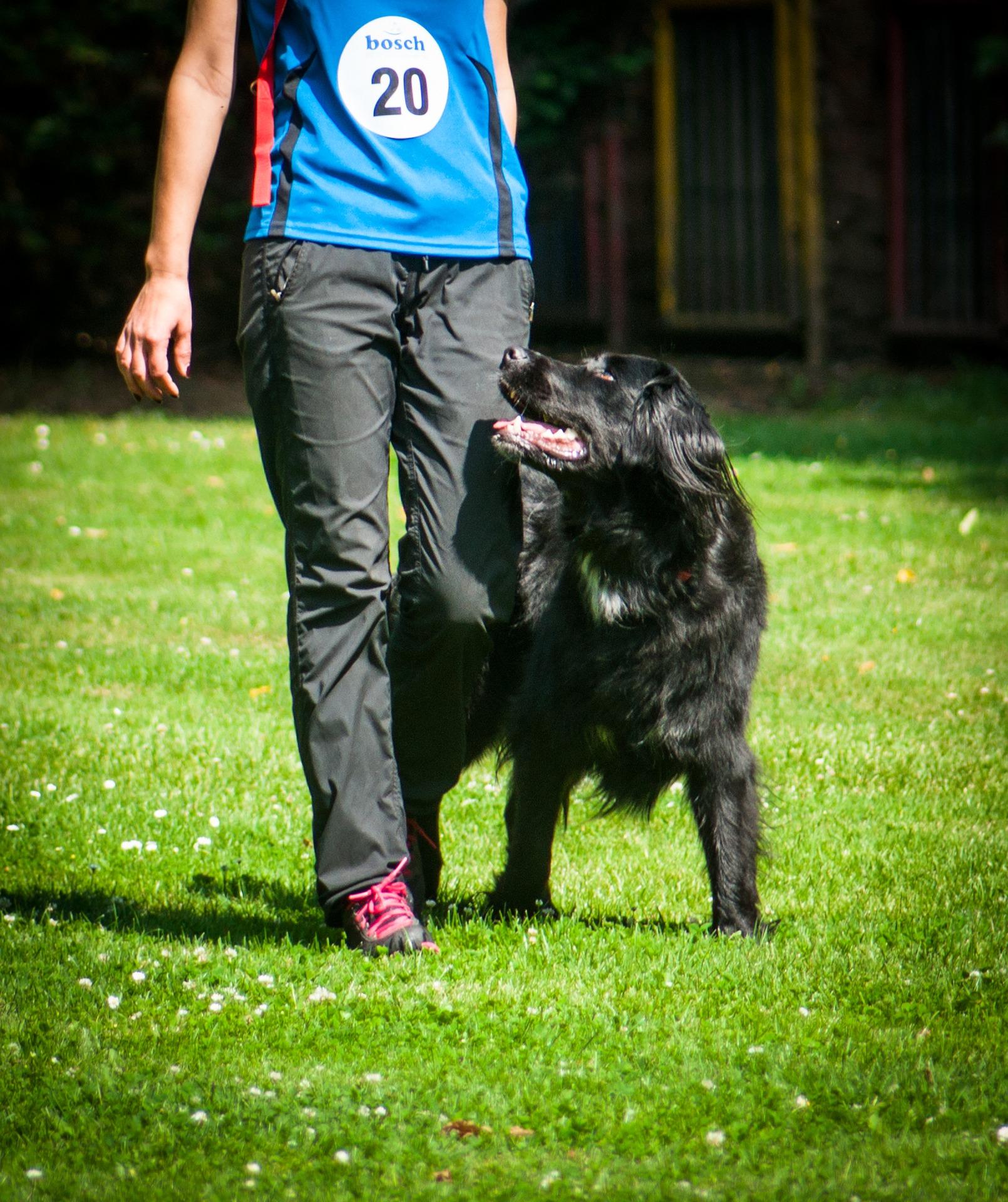 chien marchant à côté de son maître