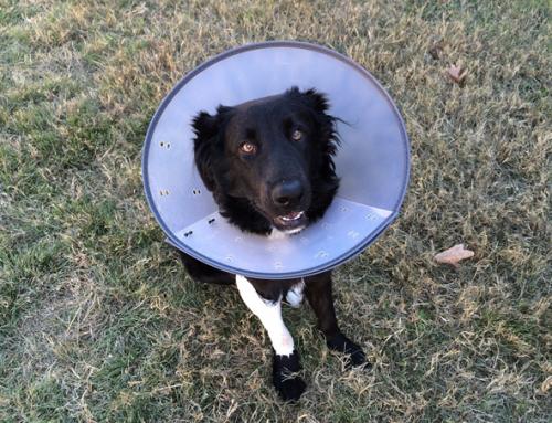 L'assurance pour chien: tout savoir
