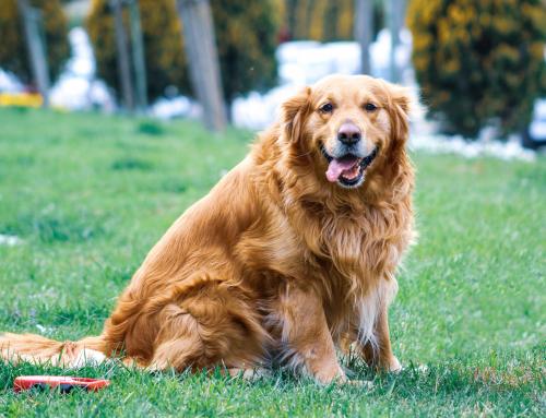 Comment faire si votre chien est en surpoids ?