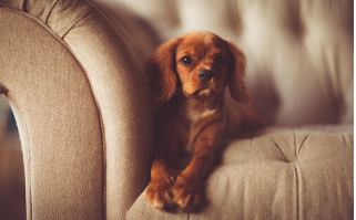 Comment garder sa maison propre avec un chien