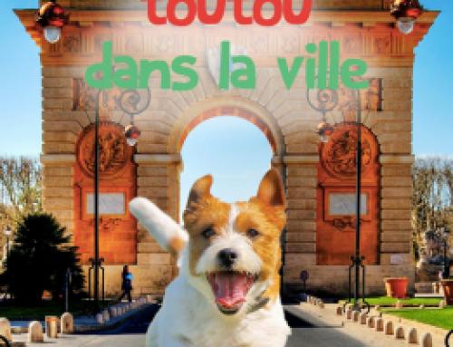 Un toutou dans la ville : les chiens à Angers