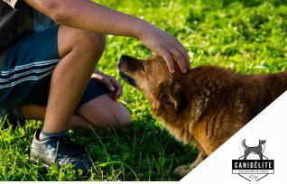 5 attitudes à éviter avec un chien