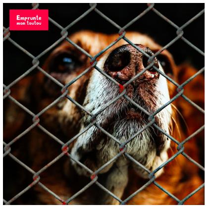 chien derrière une grille