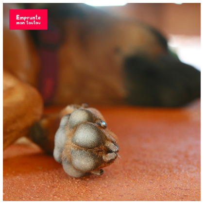 comment entretenir les pattes de votre chien