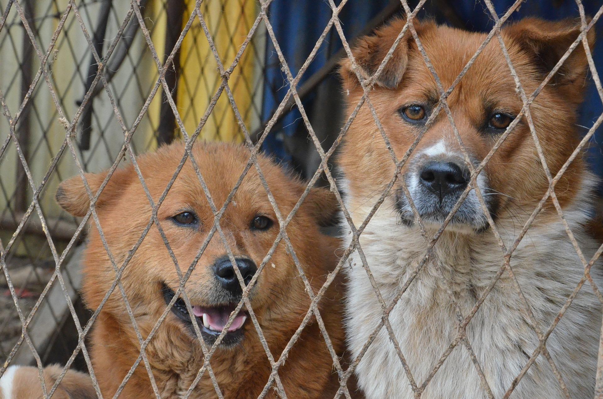 2 chiens derrière une grille
