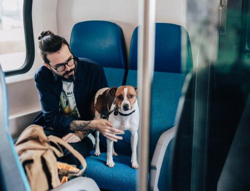 Guide pour les maîtres : Comment partir en vacances avec votre chien ?