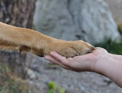 Prendre soin des coussinets de votre chien : comment faire ?