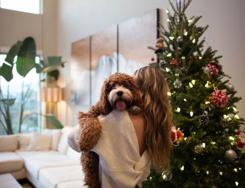 Mon super Noël avec un toutou, témoignage de Manon