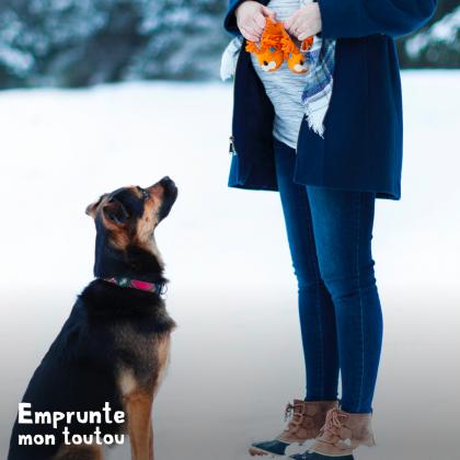 femme enceinte et chien dans la neige