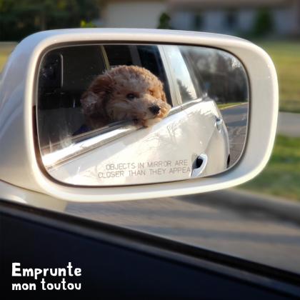 chien dans le retro d'une voiture