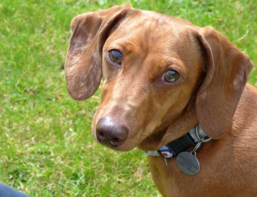 Grâce à mon chien, j'ai pu vaincre le cancer