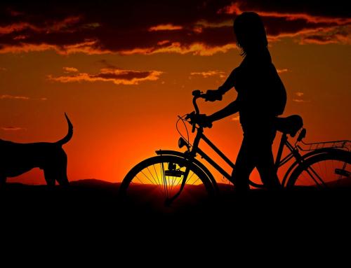 Faire une activité avec son chien : le Cani-VTT