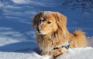 chien en hiver
