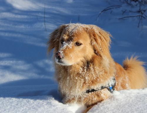 Guide du Maître : 5 conseils pour la sécurité de votre chien en hiver