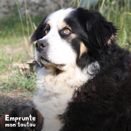 photo de profil de chien
