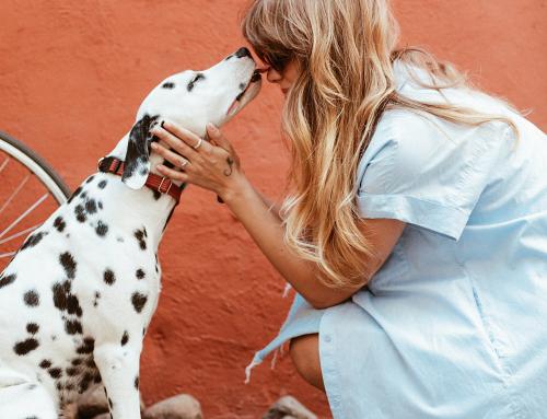 Avoir un chien et être allergique