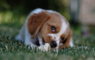 friandises pour chien à faire soi-même