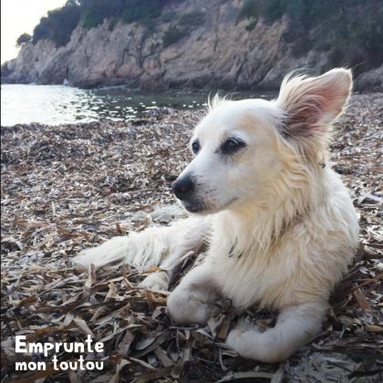 photo de chien sur une plage