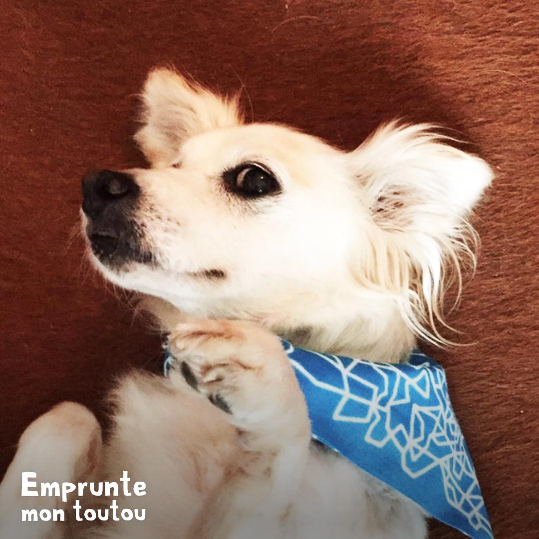 chien portant un bandana bleu