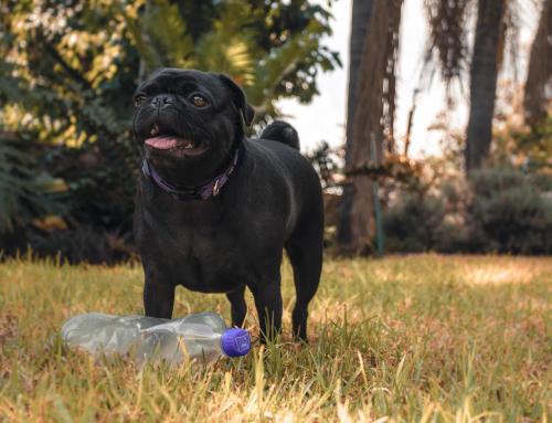 Mon chien est un pro du recyclage !