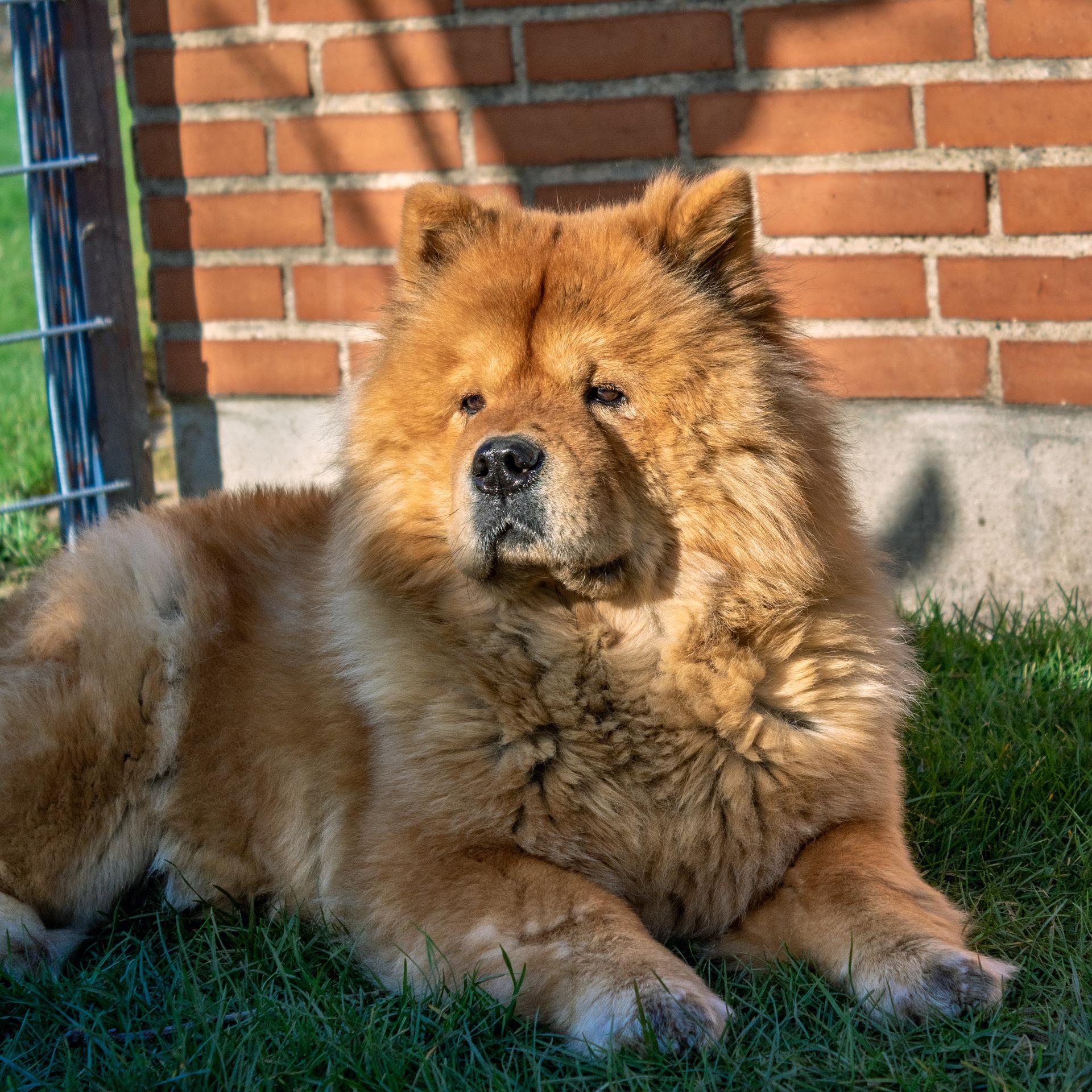 Top 10 des chiens les plus indépendants