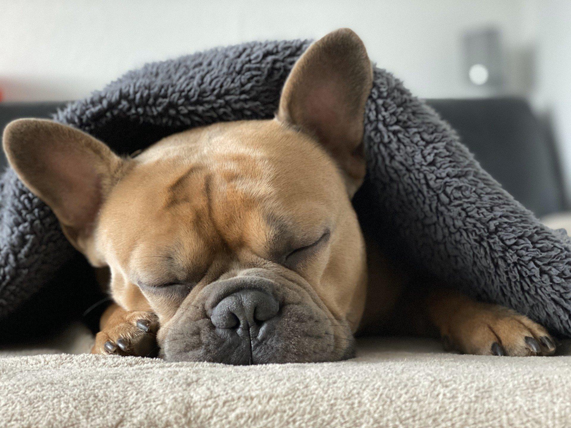 Bien vivre le confinement avec votre chien
